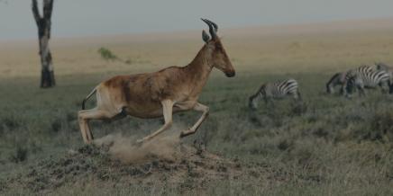 gazelle-pic-pablo